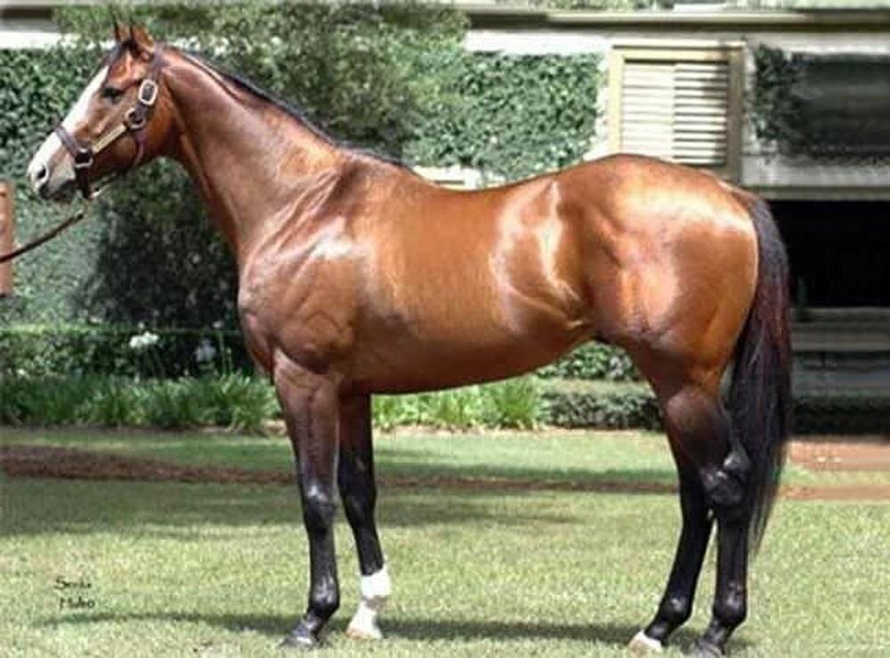विश्वको सबैभन्दा महँगो यो घोडा, मूल्य डेढ अर्ब रुपैयाँ !